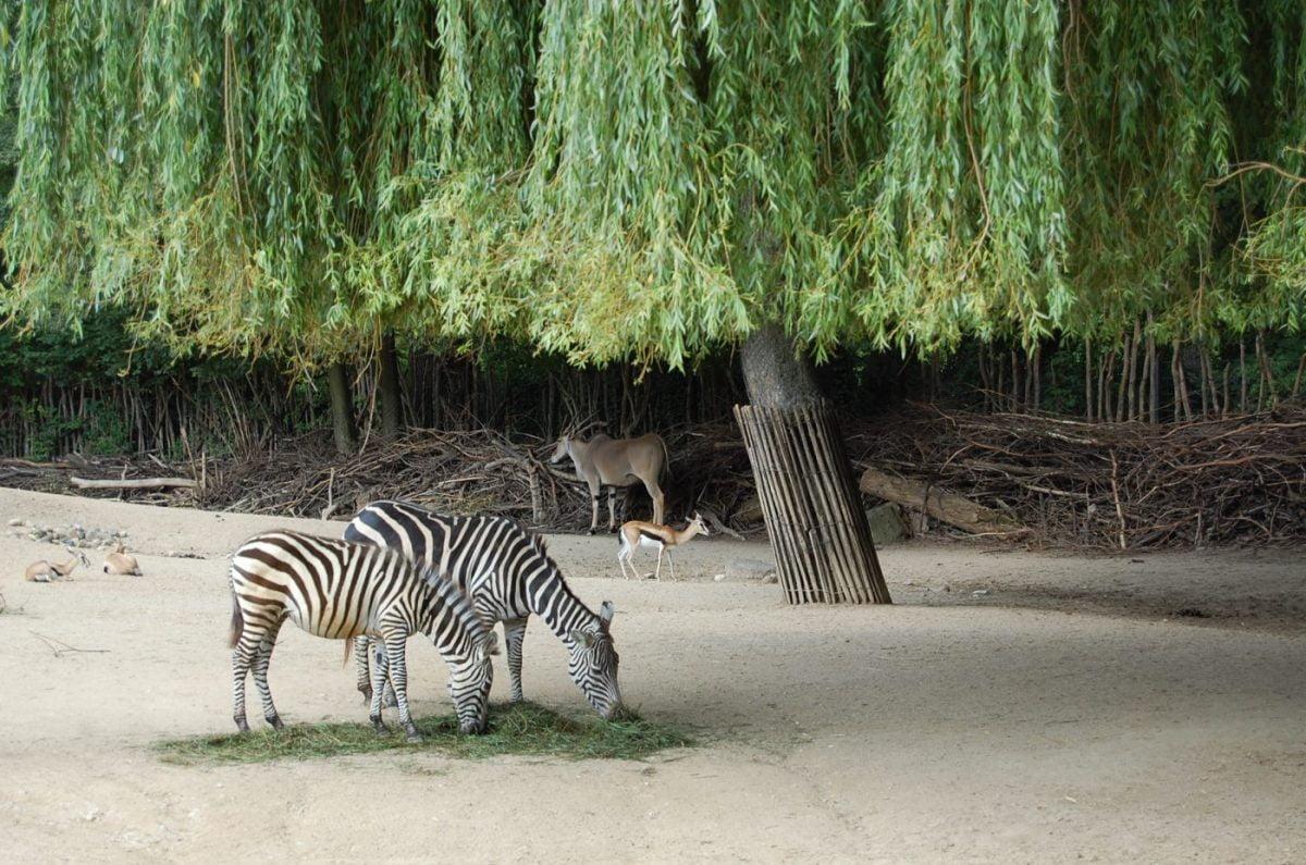 Zoo Hannover: Sambesi