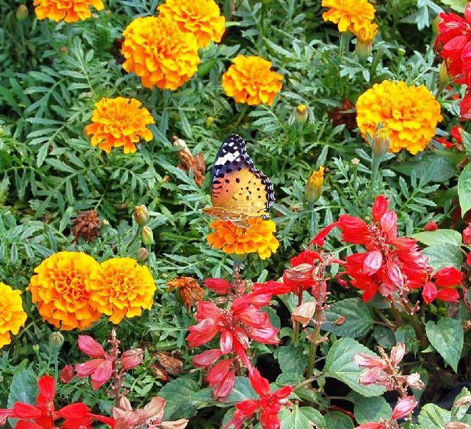 Schmetterlinge China