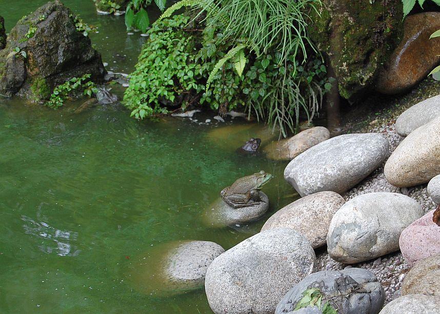 Frosch im Garten des mWenshu Tempels