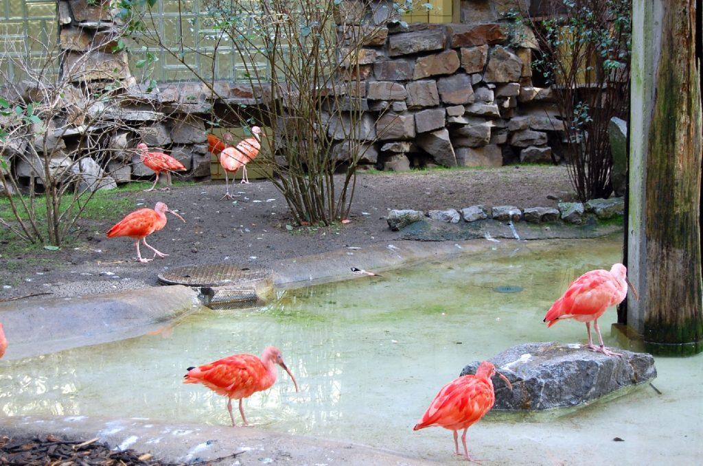 Bogelhaus im Duisburg Zoo
