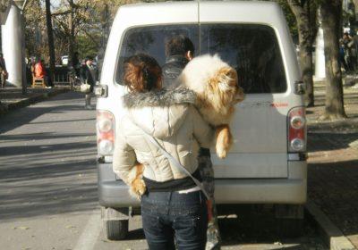 Haustier-Akupunktur kann man sich bei dieser Dame gut vorstellen