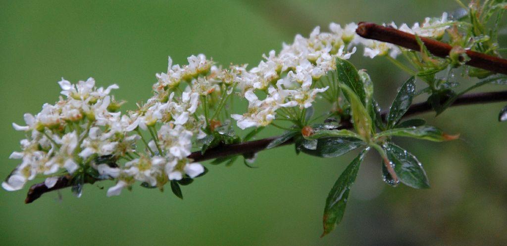 Regentropfen auf Blüten und Blättern