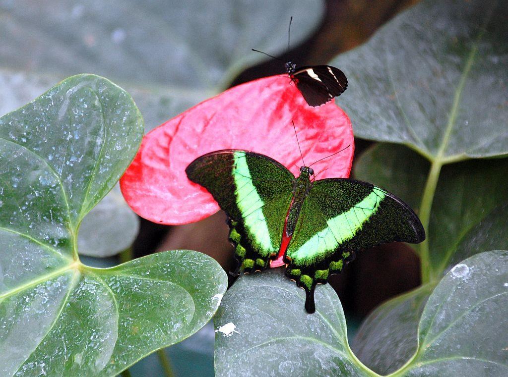Im Schmetterlinhaus