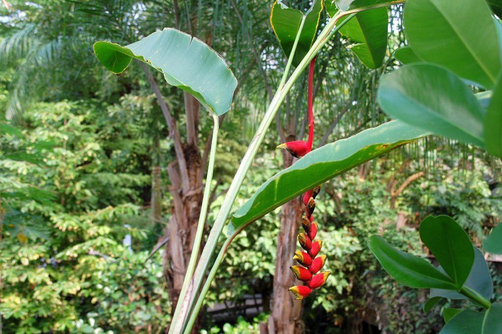 Üppige Natur im Gondwana Land