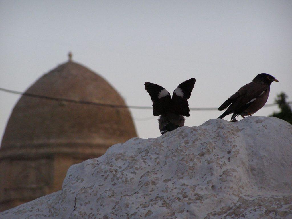 Gur Emir im Abendlicht