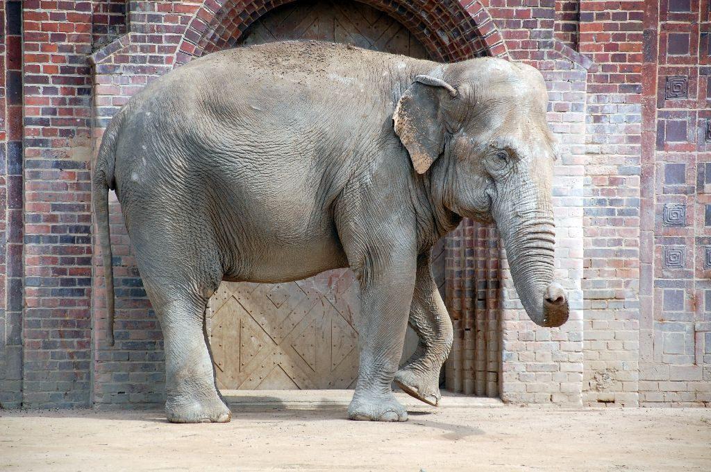 Leipzig Zoo Elefant