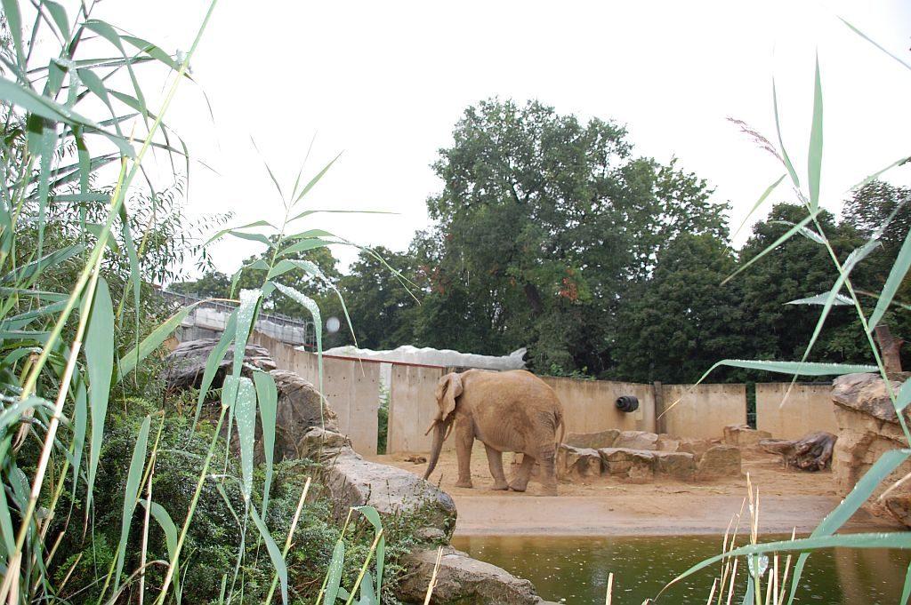 Zoo Dresden Afrikanische Elefamtem